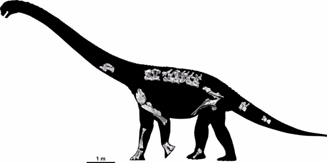 Savannasaurus elliottorum skeleton