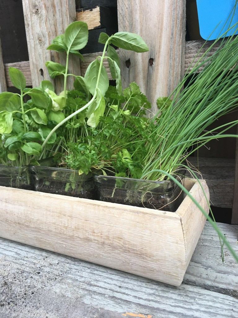 experimenting with herbs in our mud kitchen