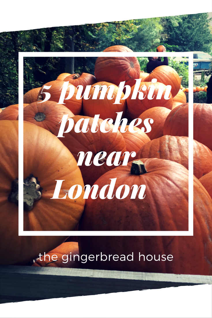 5 pumpkin patches near London for families