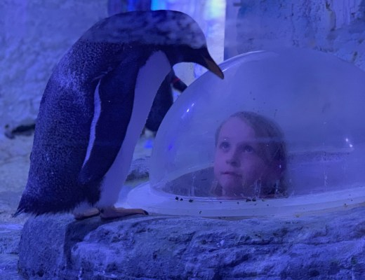 Juno the Penguin at London Aquarium