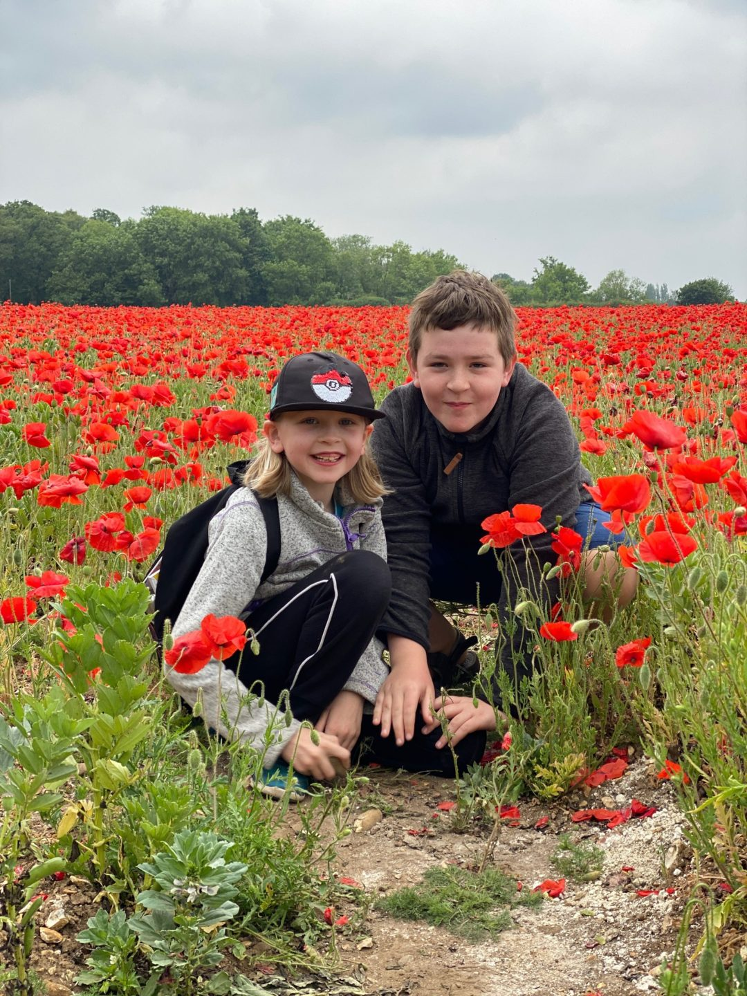 poppy fields near Welwyn, Hertfordshire