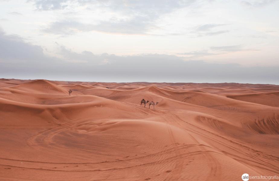 bruine zandduinen en drie kamelen