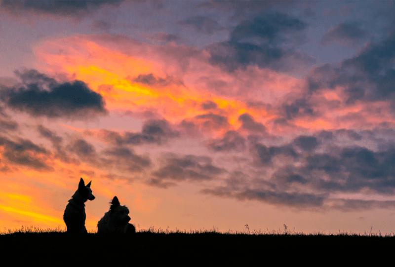 silhouetten van twee honden zittend op het gras kijken naar een mooie bewolkte zonsondergang