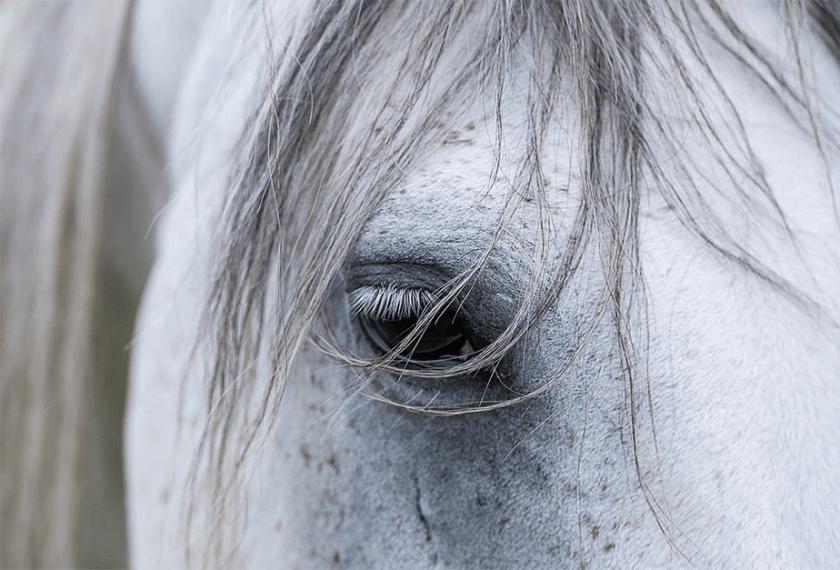 close-upbeeld van wit paardoog