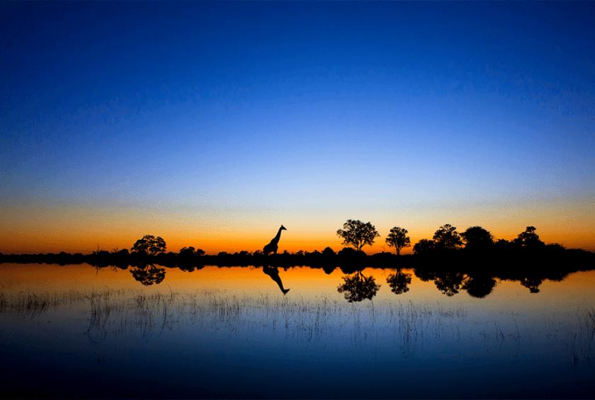weerspiegeling van een blauwe en oranje zonsondergang op de savanne met bomen en giraffe silhouet