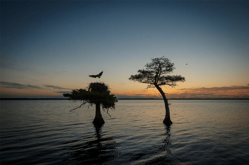 zonsondergangbomen en vogels bij blauw cipresmeer Florida