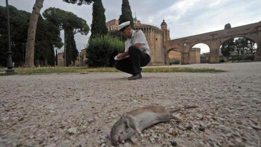 Resultado de imagen para ratas roma