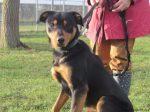 Le chien Inca avait été retrouvé mort dans son box de la SPA de Verson, le 1er avril 2017. Le procès de son tueur présumé aura lieu le mardi 26 mars 2019, devant le tribunal correctionnel de Caen. Archives