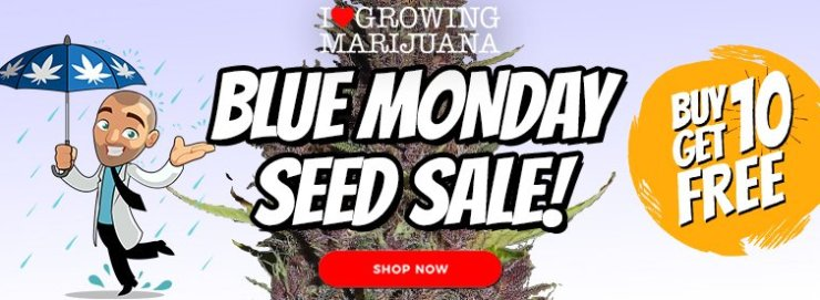 , ILGM Blue Monday Seed Sale, BeaversDen