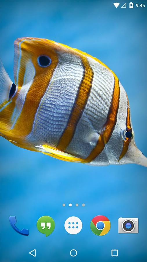 Flora Coral Fish 3D Live WP Apk Thing Android Apps Free Download