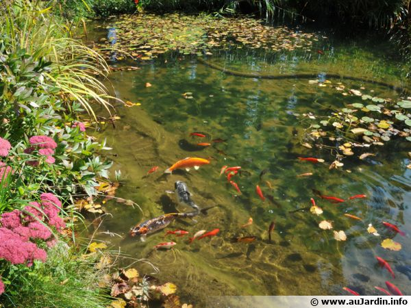 introduire des poissons dans un bassin