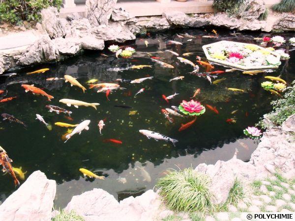 un bassin de jardin en resine polyester