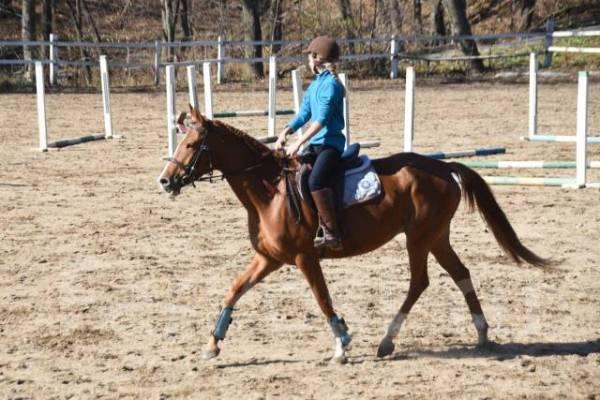 Спортивная конная секция ШВЕ Rosso - Активный отдых, спорт ...