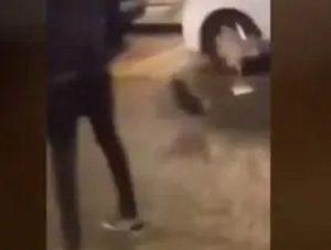 Padova, festeggia 18 anni e maltratta gallina in strada