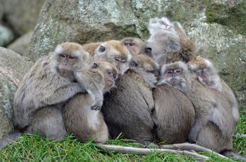 singe-family