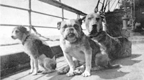 chiens-titanic