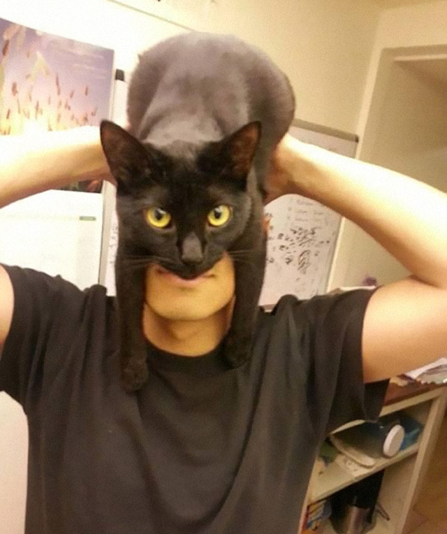 Catman Guy Shows How To Look Like Batman Using Your Cat