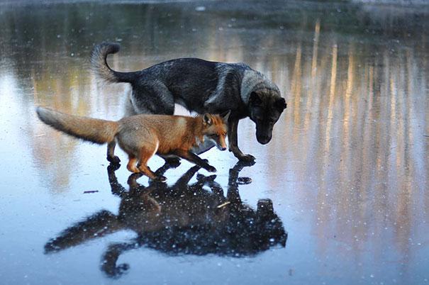 unusual-animal-friendship-1-5