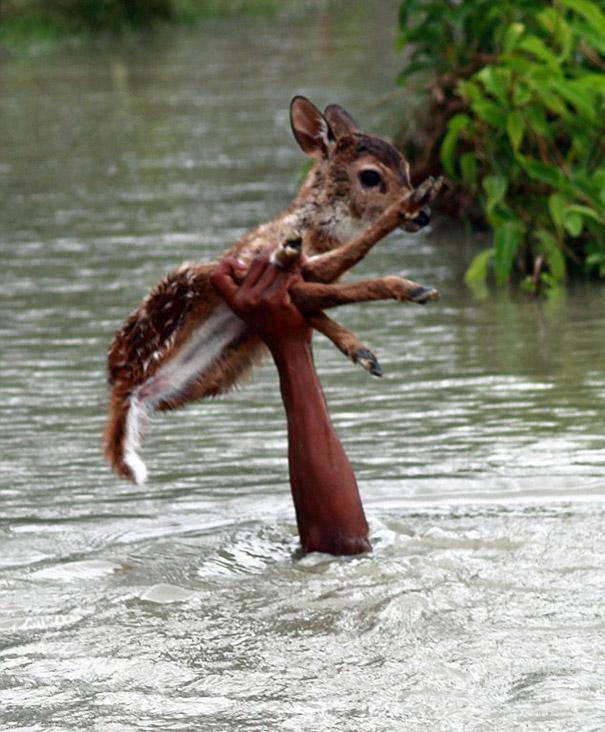 bangladeshi-boy-saves-drowning-baby-deer-1