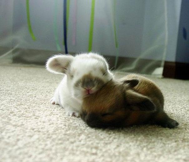 cute-animals-sleeping-pillows-4