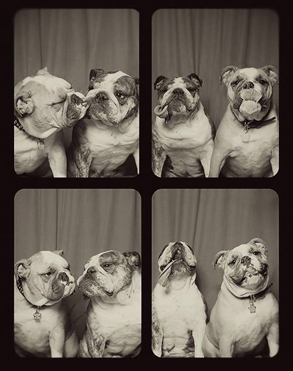 pit-bull-photo-booth-love-4