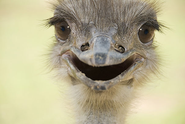 Image result for animals smiling