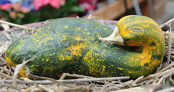funny-shaped-vegetables-fruits-6