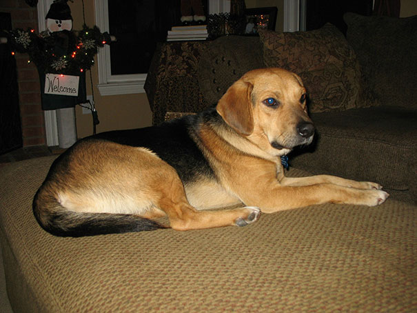 mixed-breed-dogs-1