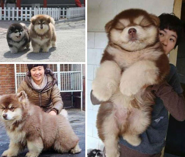 mixed-breed-dogs-7