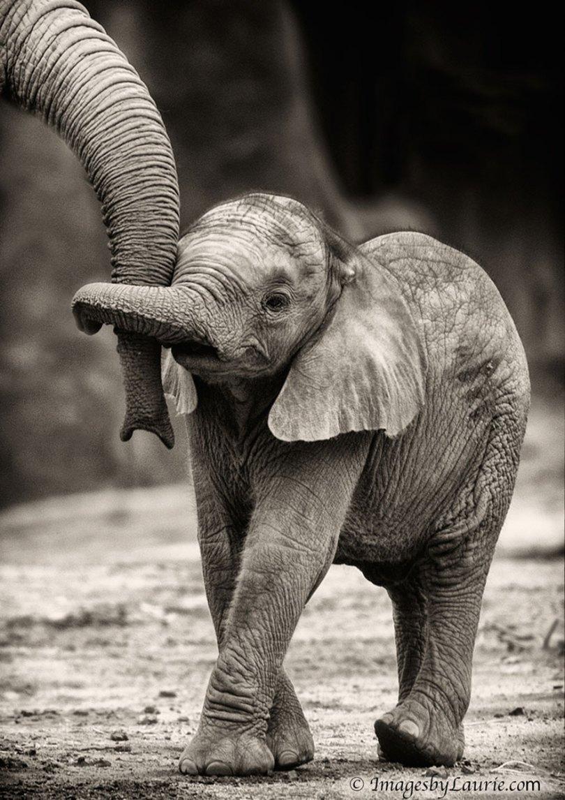 animal parents 16 - Momentos adoráveis dos pais com os filhotes no reino animal