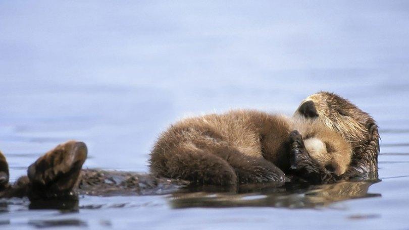 animal parents 17 2 - Momentos adoráveis dos pais com os filhotes no reino animal