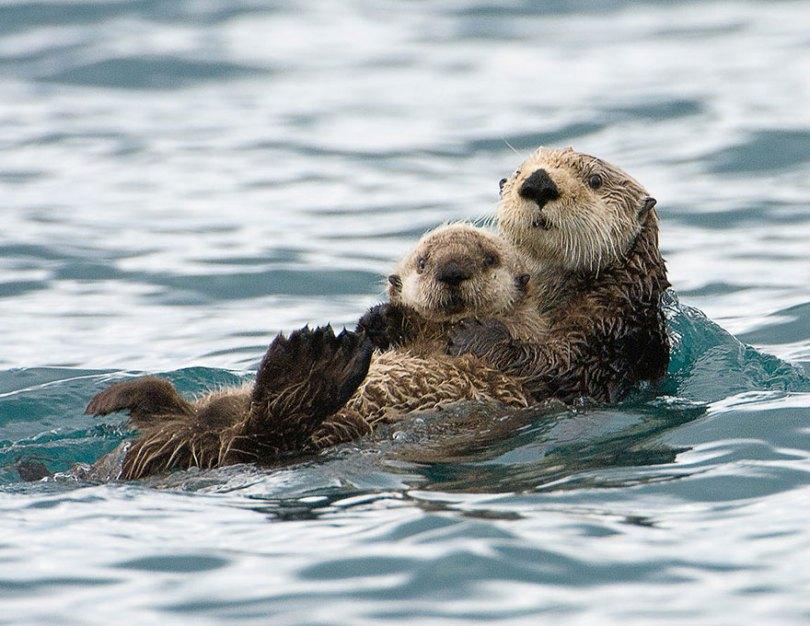 animal parents 17 - Momentos adoráveis dos pais com os filhotes no reino animal