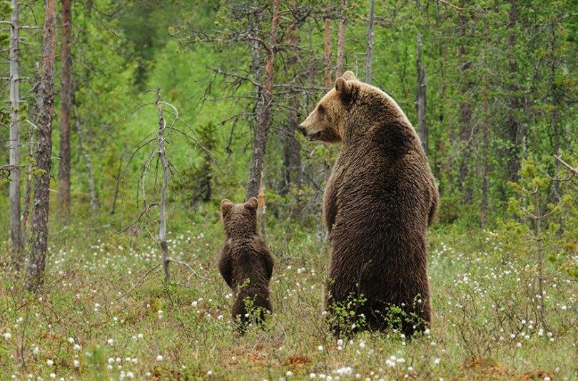 animal parents 32 - Momentos adoráveis dos pais com os filhotes no reino animal