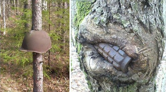 World War II Equipment Swallowed By Trees In Russia   Bored Panda