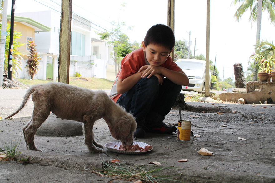 happy-animals-club-pet-shelter-kid-5