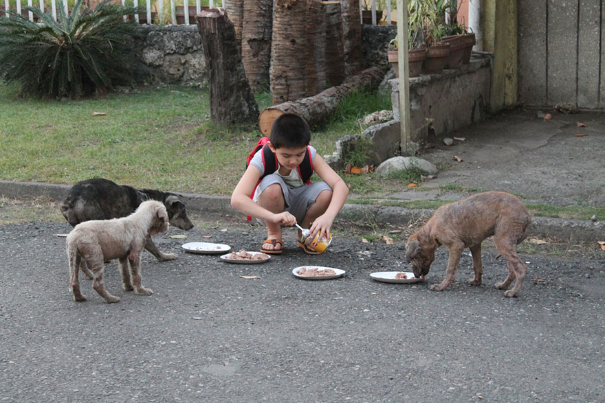 happy-animals-club-pet-shelter-kid-8
