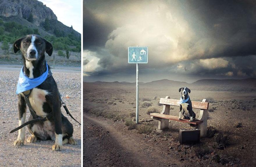 surreal-photography-shelter-dogs-sarolta-ban-5-b