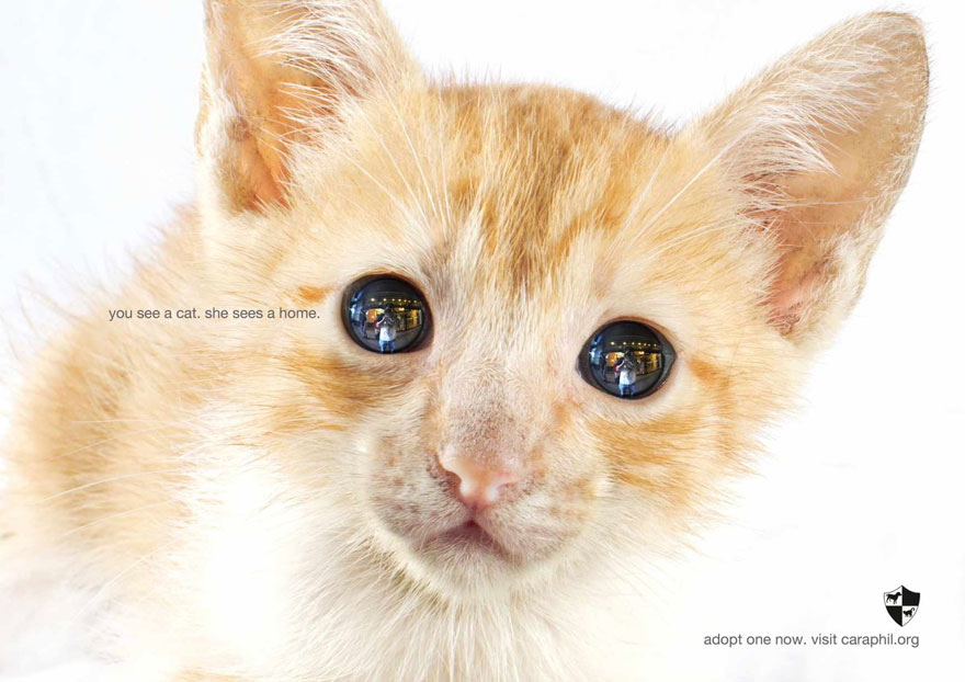 public-social-ads-animals-106