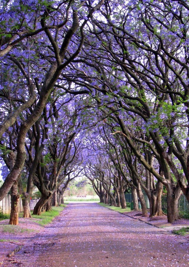 amazing-trees-9