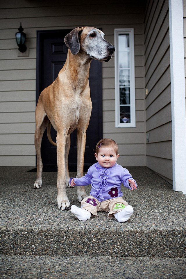 cute-big-dogs-and-babies-35