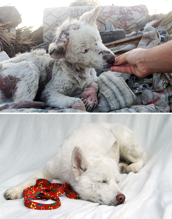 dog-makeover-before-after-rescue-32