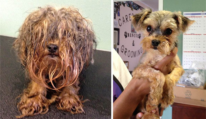 dog-makeover-before-after-rescue-4