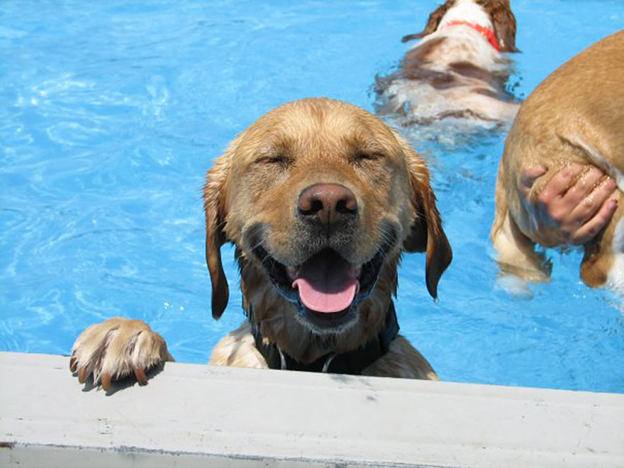 dog-pool-party-lucky-puppy-23