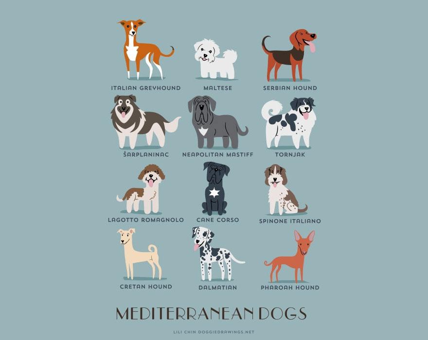 dogs-of-the-world-lili-chin-17