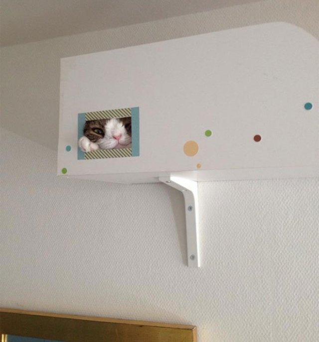 cute-cat-without-nosal-bone-monty-17