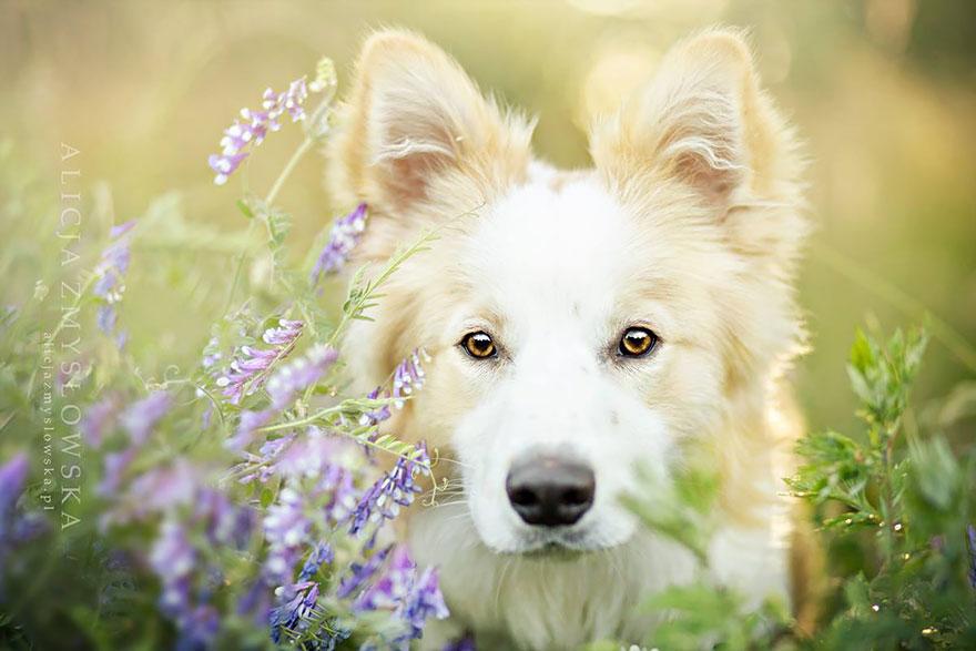 dog-photography-alicja-zmyslowska-22