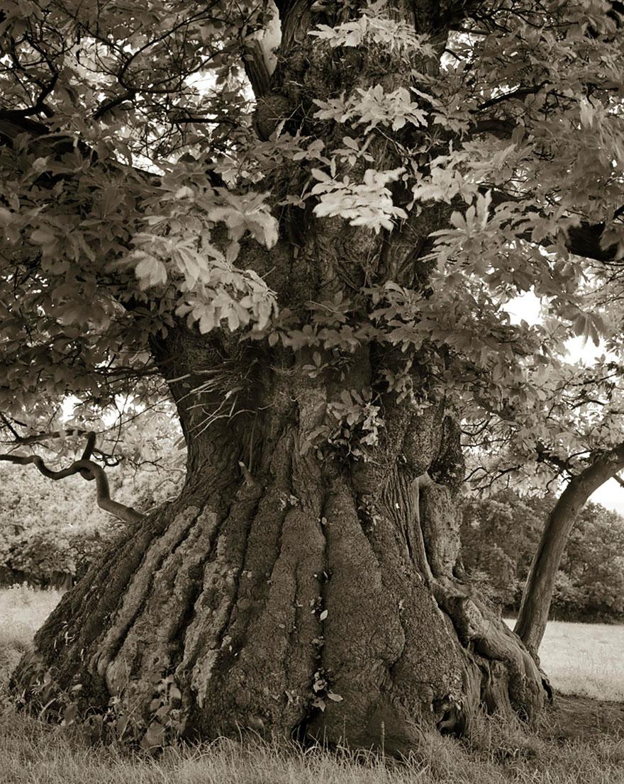 antichi alberi-Bet-moon-12