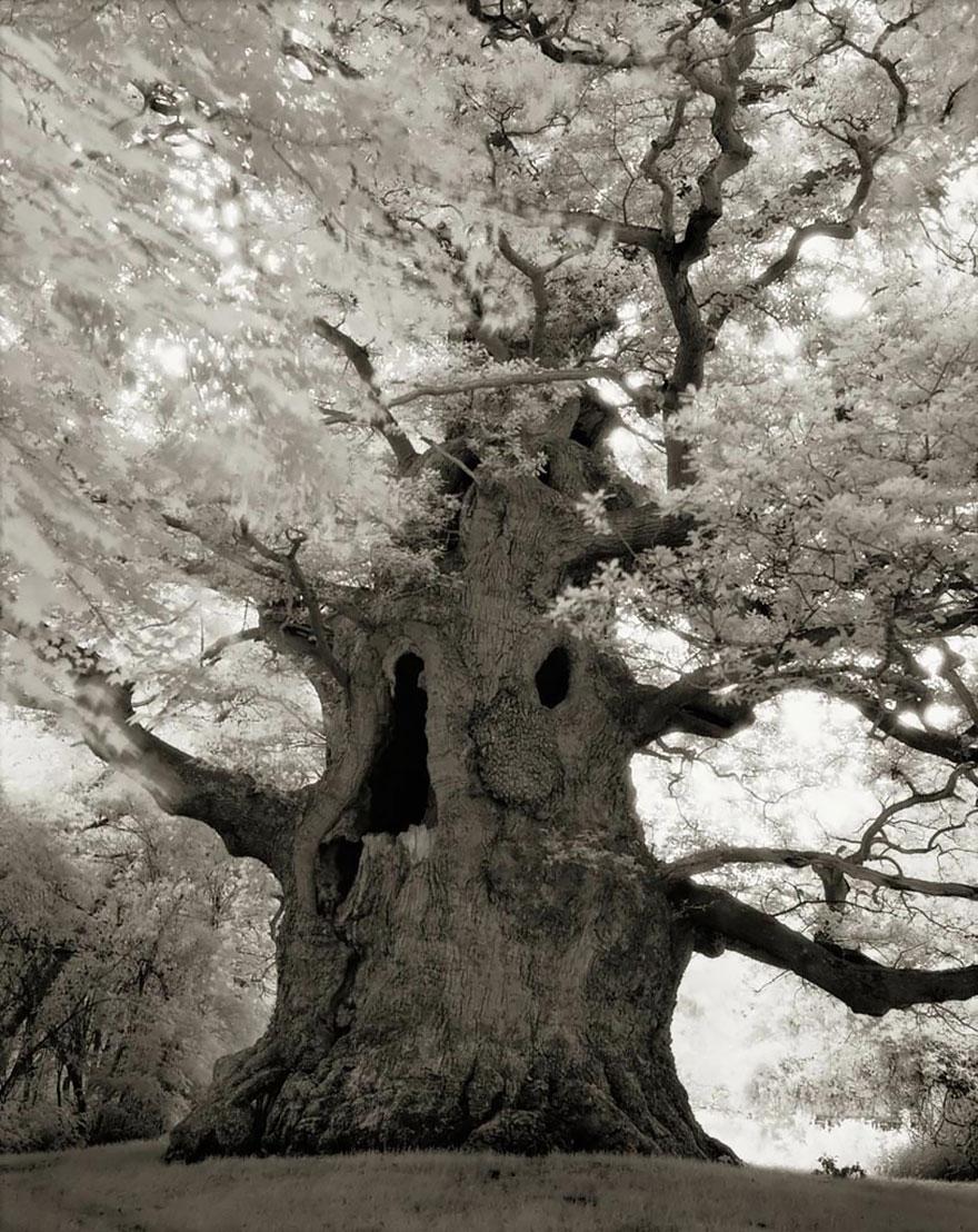 antichi alberi-Bet-moon-16