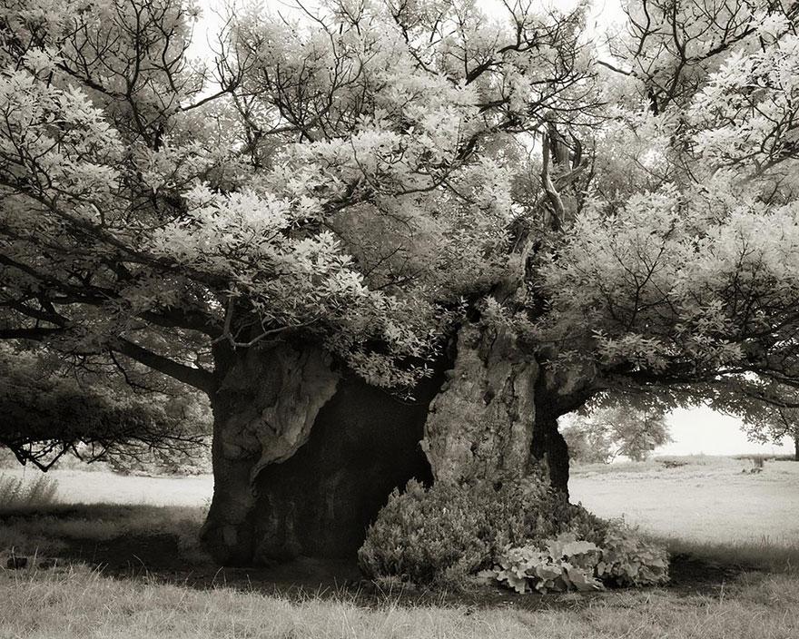 antichi alberi-Bet-moon-19