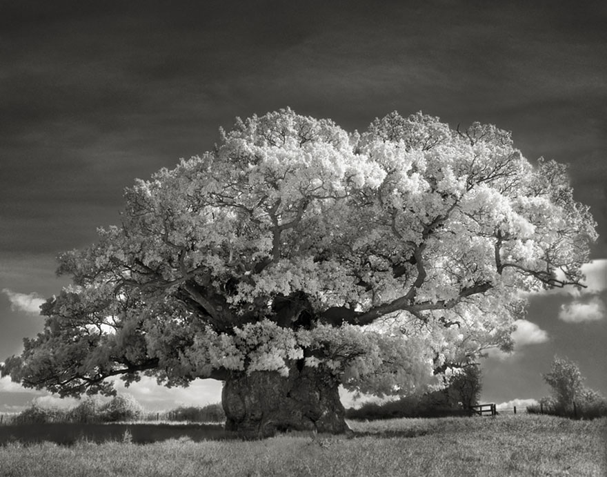 antichi alberi-Bet-moon-2